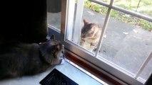 Chats derrière une vitre. Chats drôles de défense à travers le verre