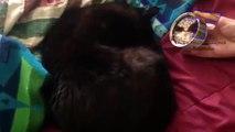 Chats et chiens se réveillent - Fun avec des animaux (collection)