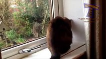 Chats et chiens contre les mouches - une collection de drôles d'animaux