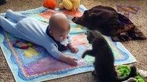Chats meilleures infirmières et nounous. Chats mignons et les enfants (collecte)