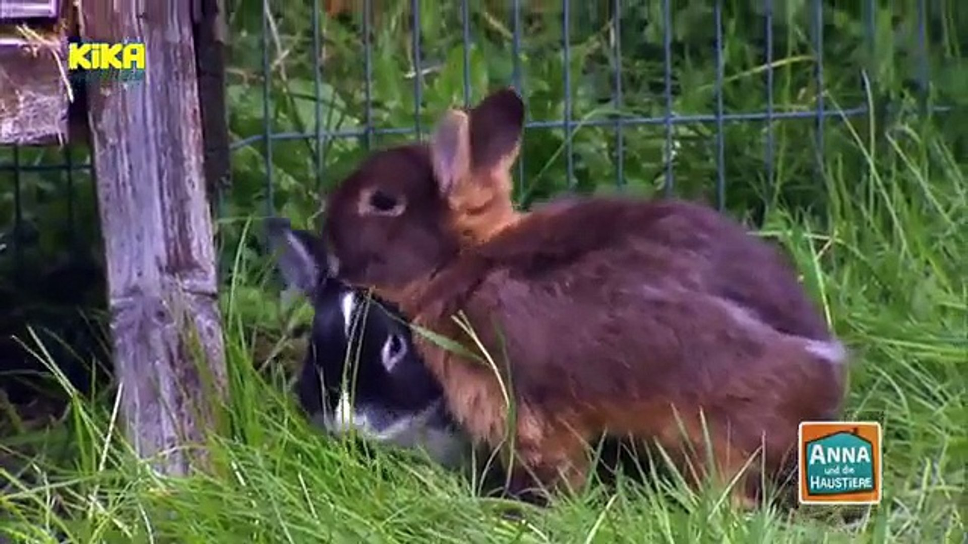Kika Live Dein Hobby Kaninchenfotografie Mehr Auf Kika De