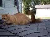 Кот и белочка!-на ютубе