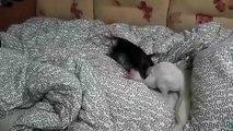 Têtes de jeu. Drôle chat et de chien jouant sur le lit