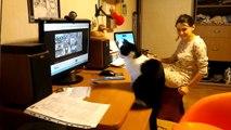 Ce chat essaye d'attraper un oiseau à travers un écran !