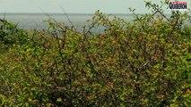 Belle-ile en mer - Le sublime Phare de Kerdonis - TVBI Belle-ile en mer 24/7