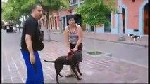 Mira cómo este Pitbull casi mata a otro perro en una plaza