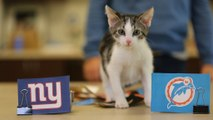 Stats vs. cats: NFL Week 14 picks