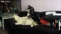 Un chien réveille un autre chien! Debout!!!!!!!
