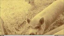 animaux de la ferme Farm animals | Adventure Valley Durham | goats pigs rabbits chicken