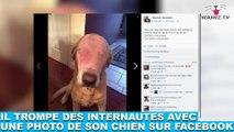 Il trompe des internautes avec une photo de son chien sur Facebook ! L'histoire tout de suite dans la minute chien #95