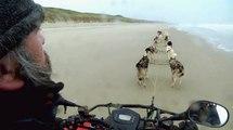 Des chiens de traineaux sur le littoral