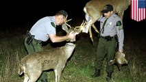 This is why Robo-Deer sting operations probably give poachers nightmares