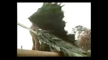 Tribes Documentary - Tribes in South America: Zo'é people near Amazon River, Brazil