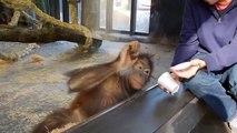 Un singe qui est mdr