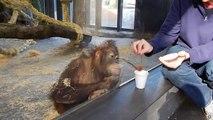 La réaction de ce singe à qui l'on fait un tour de magie est géniale