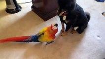 Parrot traz medo. Cães engraçados têm medo de grandes papagaios