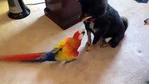 Parrot apporte la peur. Chiens drôles ont peur de grands perroquets
