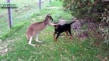 Les animaux d'amitié incroyables. Petits animaux sont capables d'être amis