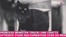 Princess Monster Truck: Une chatte atteinte d'une malformation star du web! L'histoire dans la minute chat #66