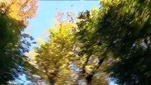 Page nature : les cerfs en forêt de Tronçais