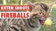 Kitten Shoots Fireballs - Epic!