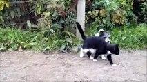 Gatos e cães de combate simulados. Animais engraçados