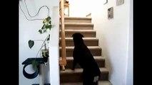 Les chiens sont peur des chats. Les chats et les chiens drôles