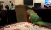 Trolls Parrot chat. Drôle perroquet obtient chat