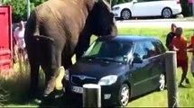 crazy elephant - what do elephants eat & all about elephants