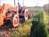 Planting Small Trees and Evergreens...Video on Planting Trees   By B Hirst