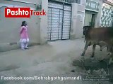 Pakistani funny videos part 2 | Cow acting with child | pakistani funny videos dailymotion - video dailymotion
