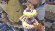 Le venin de ce serpent transforme le sang humain en gelée. Flippant