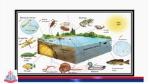 Littoral Zone , Limnetic Zone & Photic Zone