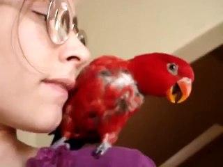 Menina papagaio falante