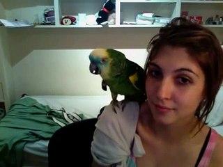 Ela ensina papagaio a falar e cantar em espanhol