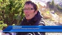 D!CI TV : Hautes-Alpes : On a suivi le ramassage des premières baies de genievre de la saison