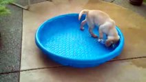 Labradors Are Awesome - Compilation
