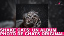"""Shake Cats"": un album photo de chats original! Aujourd'hui dans la minute chat #70"