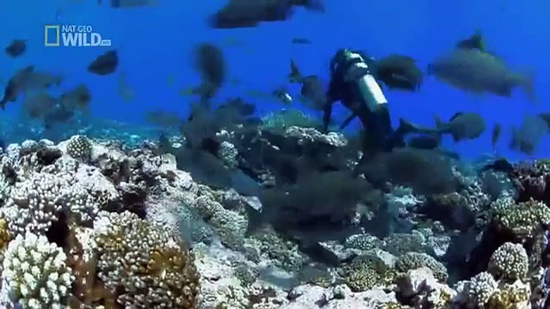 Wild discovery channel animals - Shark Of Lost Island National Geographic documentary Animal planet