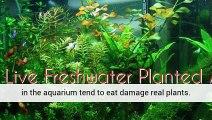 Aquarium Plants And Ph Planted Aquarium Aquarium Plants Uk