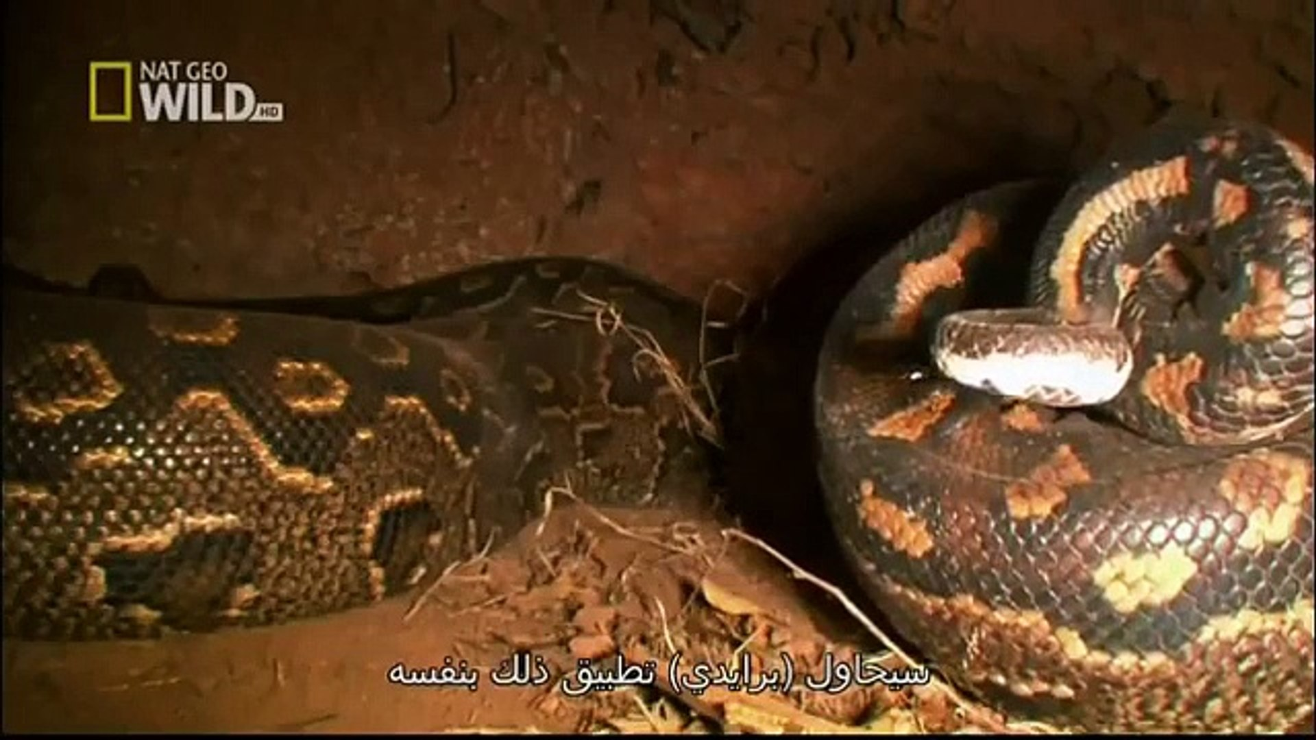 Discovery Channel || Discovery Channel Animals || World