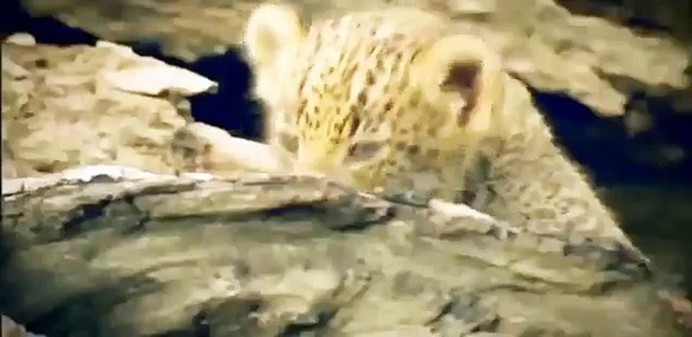 Discovery Animals - Animals Planet 2015 - Wild Kalahari