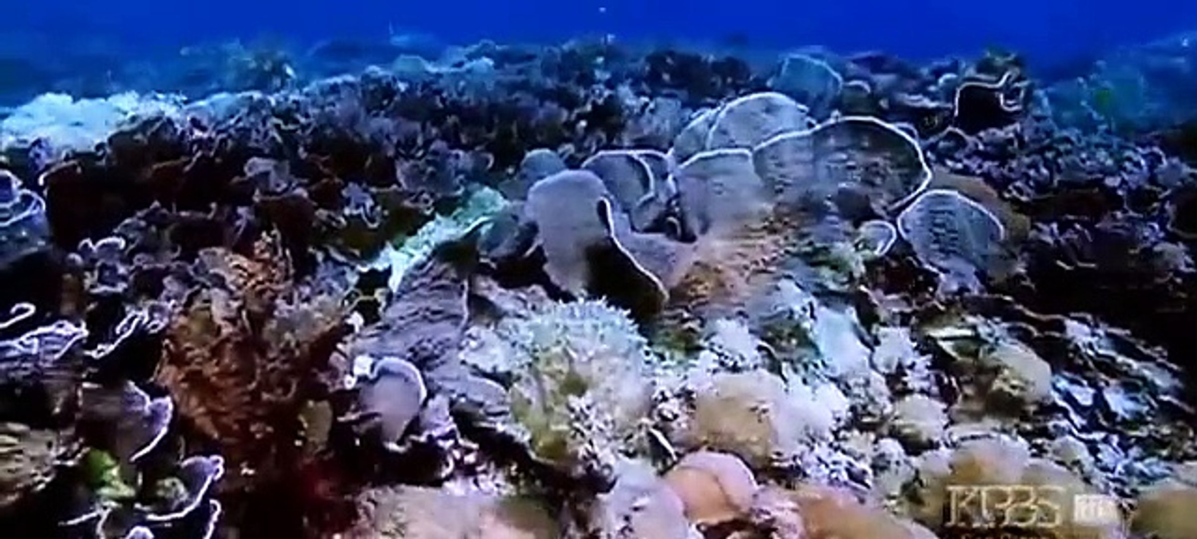 Discovery channel - Discovery Animals - Discovery Kings of Camouflage Underwater