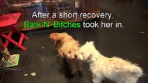 An abandoned dog on the railroad tracks gets rescued - you must see this! Please share.