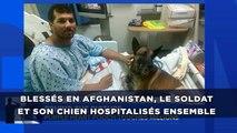 Blessés en Afghanistan, le soldat et son chien hospitalisés ensemble