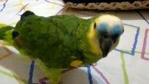 Amusant perroquet parlant espagnol