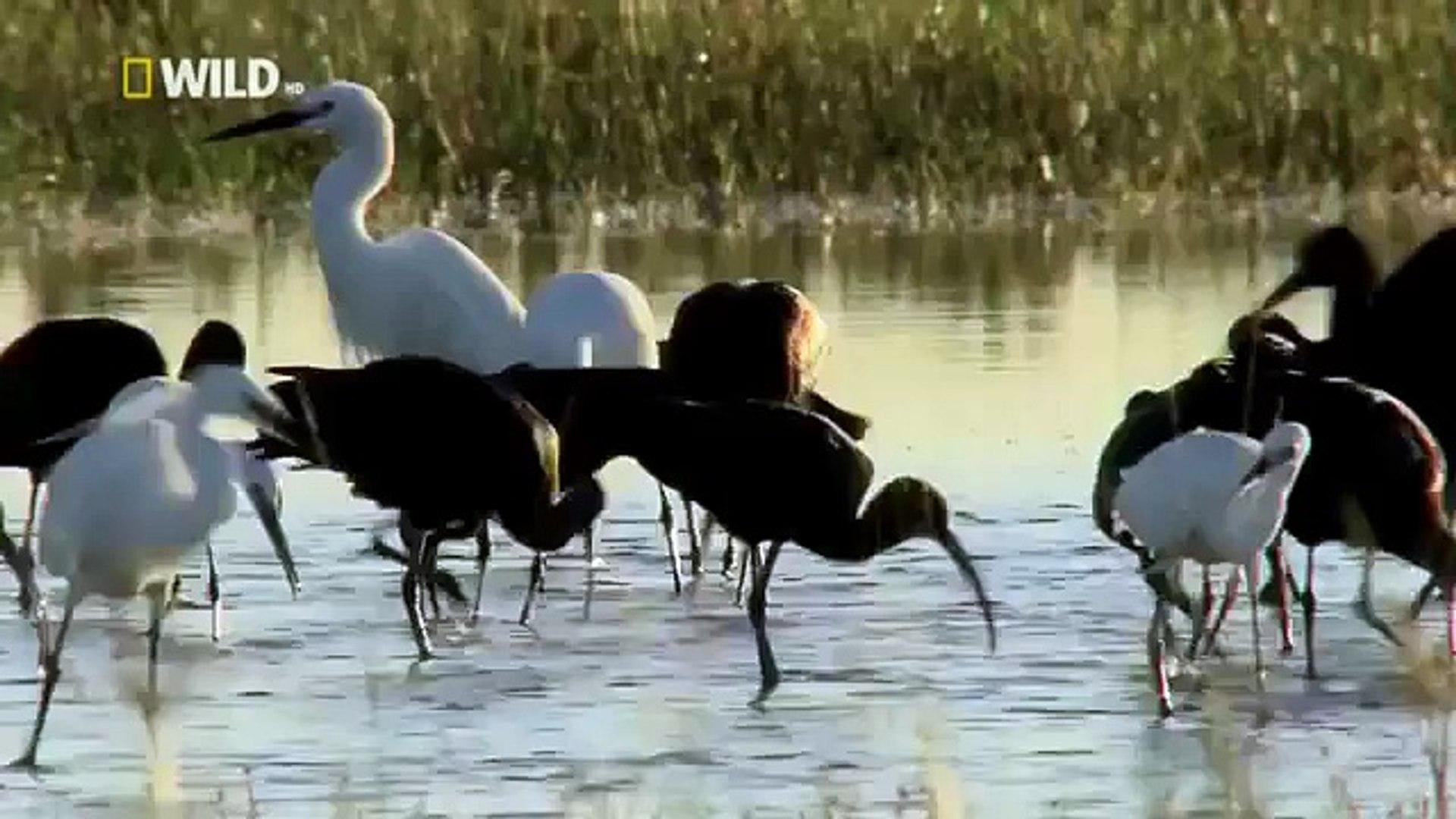 Animal Planet || Discovery Channel || Wildlife Animals || Hyena Documentary