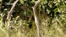 Discovery Channel Animals Discovery Channel Documentary Lion Documentary 2015 HD