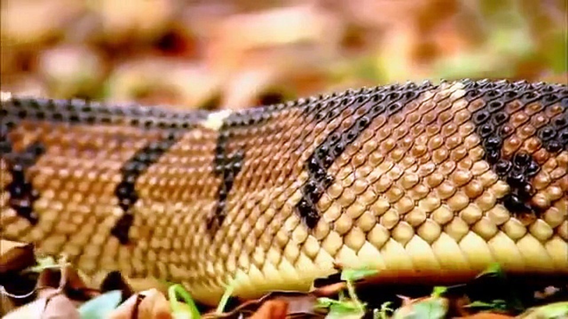 Animal Planet || Discovery Channel || Wildlife Animals || Beautiful Snake Documentary