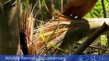 Wildlife Animals Documentary Animal Planet Elephant Documentary    Animals Planet Discovery
